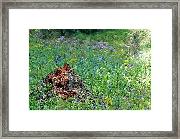 The Contrast Of Life And Decay Framed Print by Andrew Serff