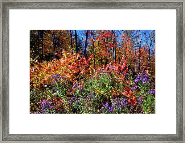 The Full Gamut Framed Print