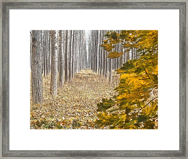 The Geometry Of Autumn Framed Print