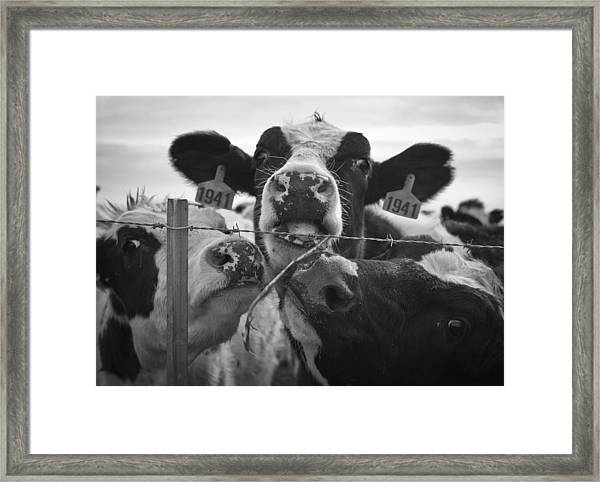 Framed Print featuring the photograph The Girls by Priya Ghose