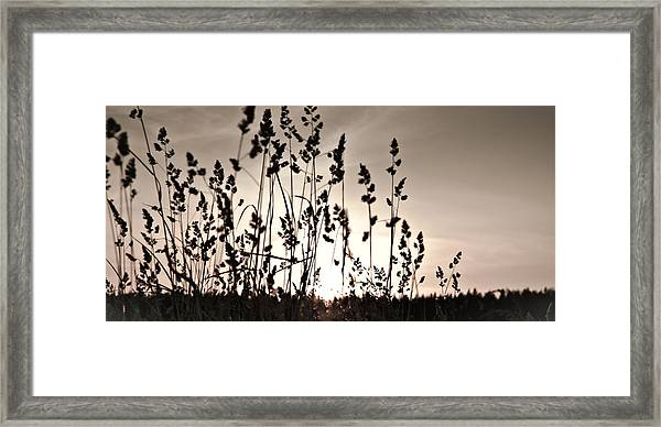The Grass At Sunset Framed Print