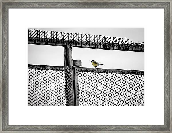 The Great Tit Framed Print