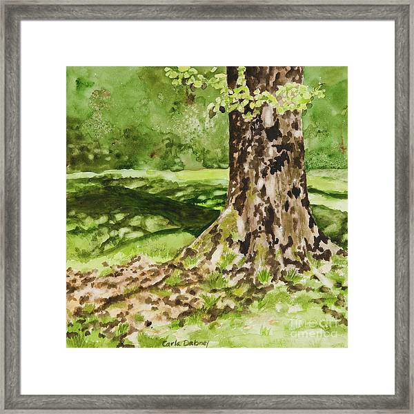 The Green Grass Grew All Around Framed Print by Carla Dabney