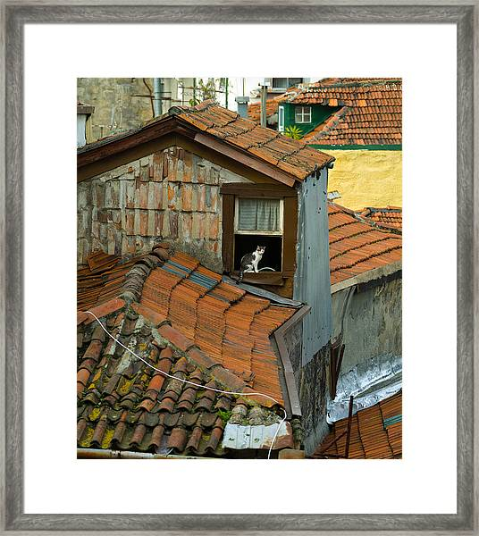 The Lord Of The Roofs Framed Print by Dias Dos Reis