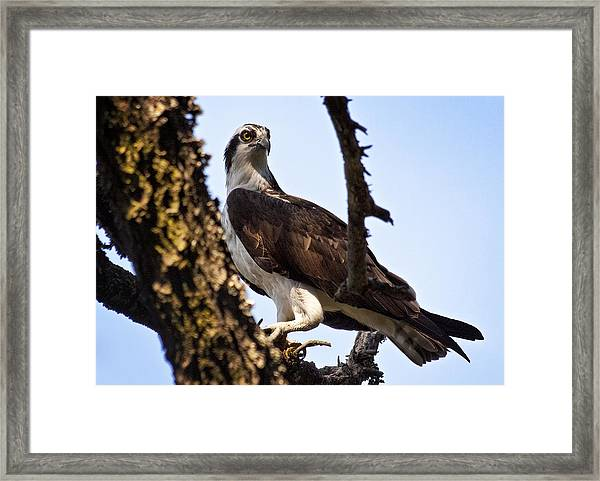 The Mighty Fisher Framed Print