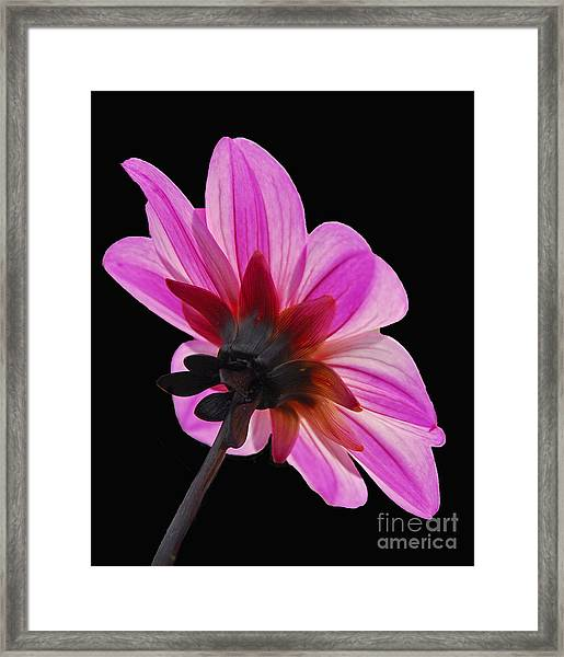 The Other Side Of The Floral Framed Print