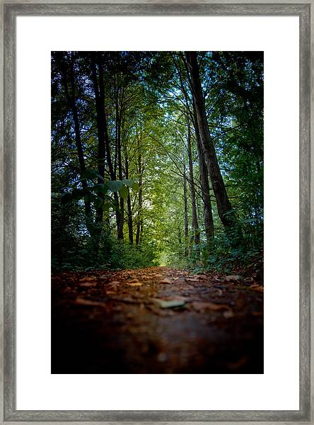 The Pathway In The Forest Framed Print