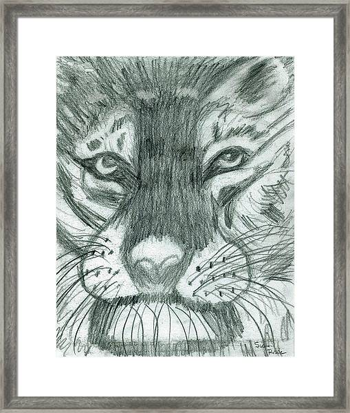 The Puma Framed Print by Susan Risse