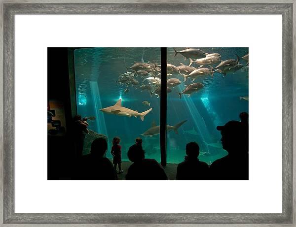 The Shark Tank Framed Print