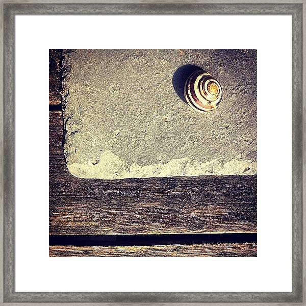 The Snail Framed Print