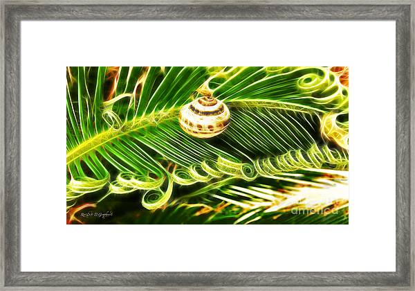 The Spirals Of Life Framed Print