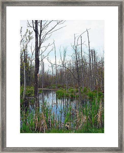 The Swamp Framed Print