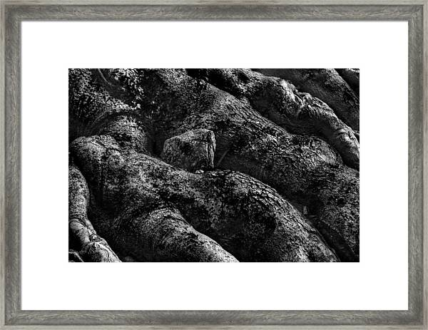 The Turtle Rock In Trees Framed Print