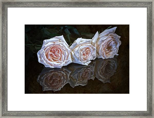 Three Roses Still Life Framed Print