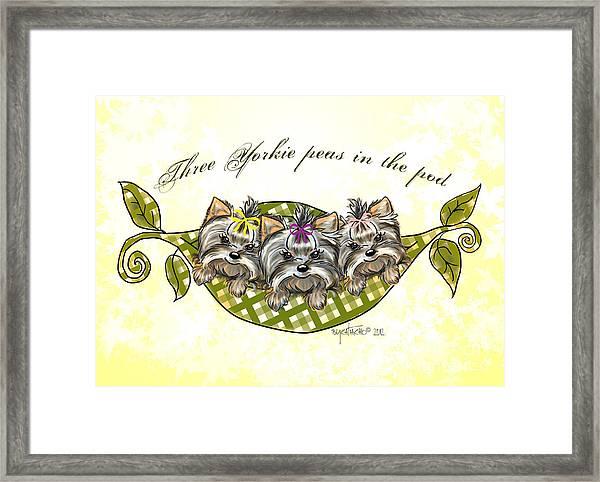 Three Yorkie Peas In The Pod Framed Print