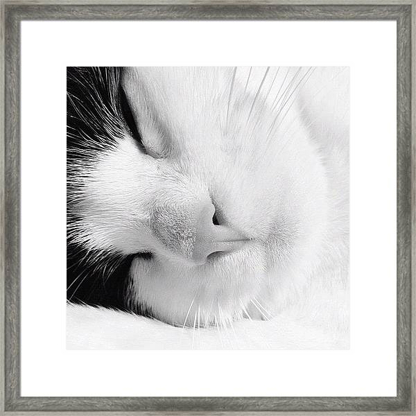 Tier Sleeping Framed Print