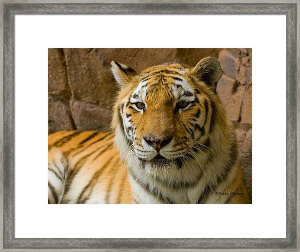 Tiger Stripes Framed Print
