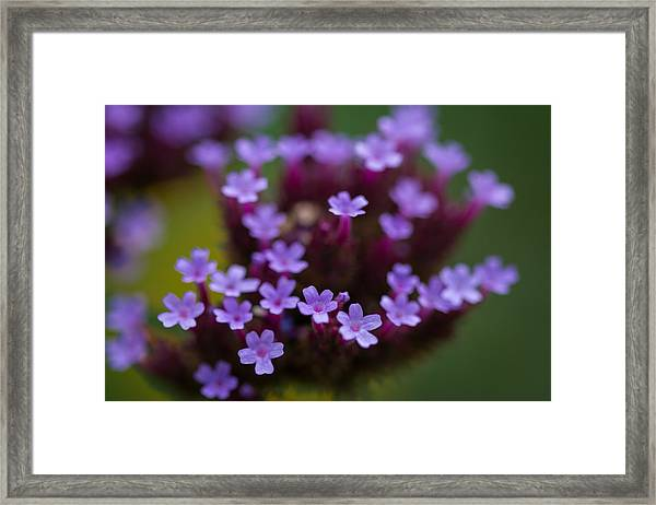 tiny blossoms II Framed Print