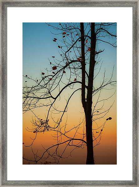 To The Morning Framed Print