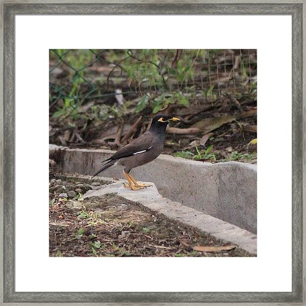 Today's Catch Of The Camera, A Smart Framed Print