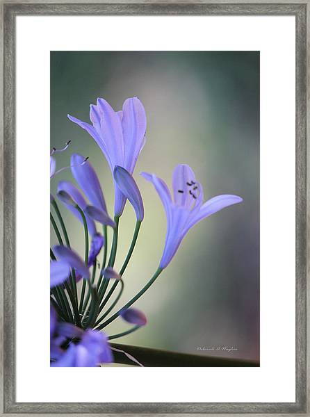 Touch Of Light Framed Print