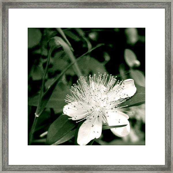 Framed Print featuring the photograph Touch by HweeYen Ong