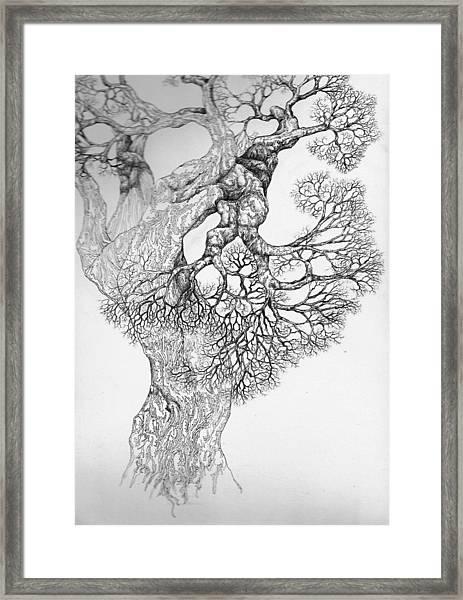 Tree 21 Framed Print
