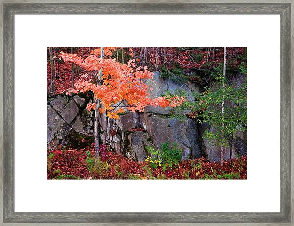 Tree And Rock Framed Print