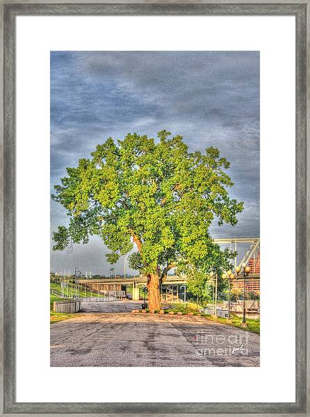 Tree At Newport On The Levee Framed Print