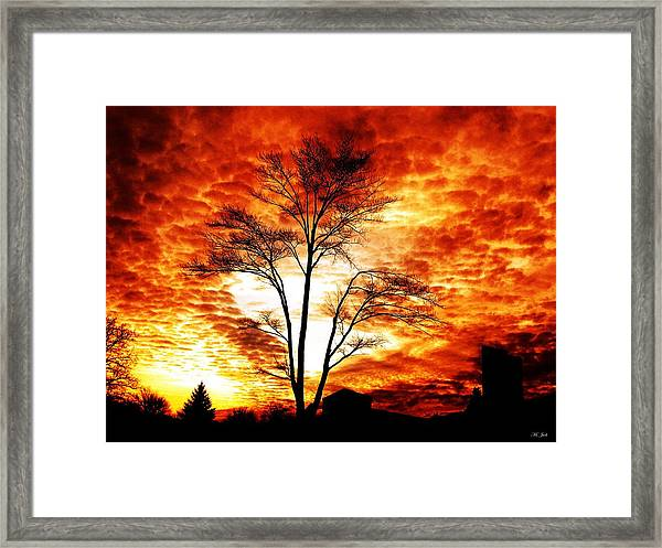 Tree Light Framed Print