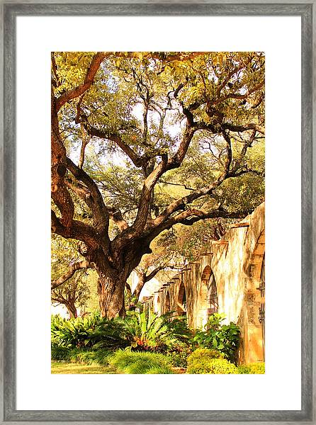 Tree Over Alamo Gardens II Framed Print