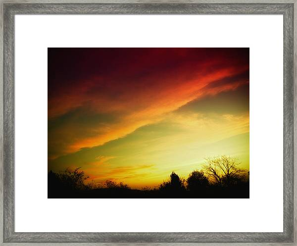 Tree-scape At Sunset  Framed Print
