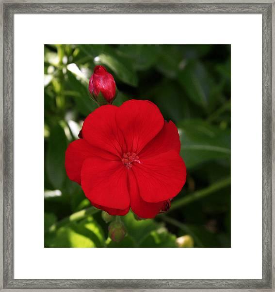 True Red Framed Print