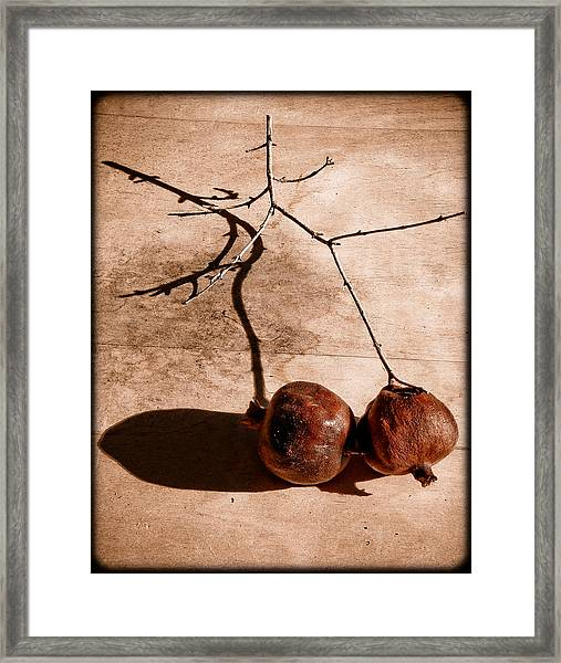 Albuquerque, New Mexico - Twin Pomegranates Framed Print