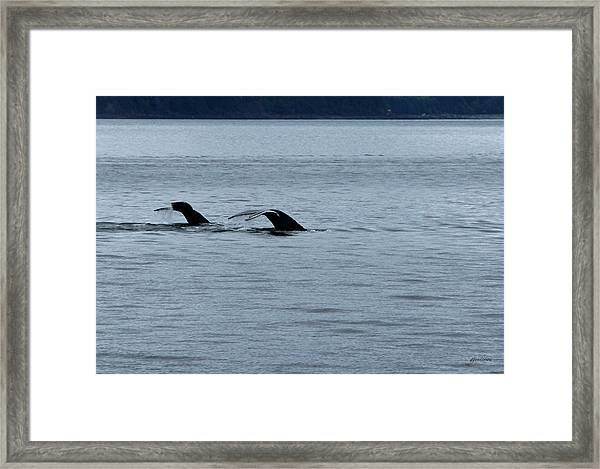 Two Tails Of Whales Framed Print