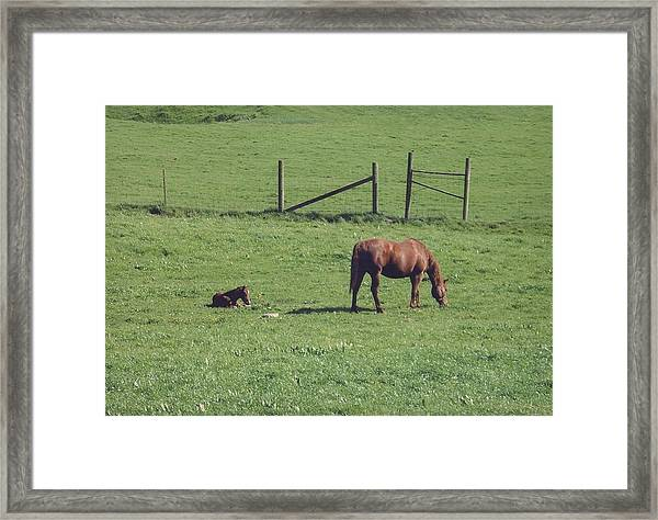 Uncle Jim's Ranch Framed Print