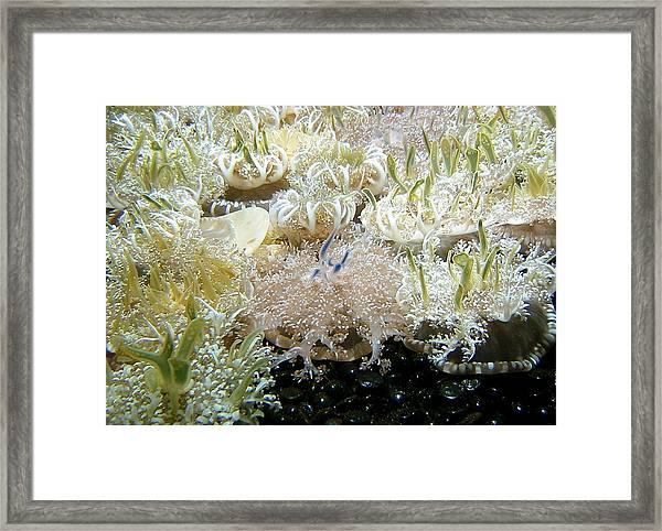Underwater Beckoning Framed Print