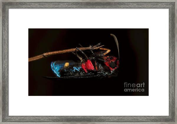 Unknown Moth Framed Print
