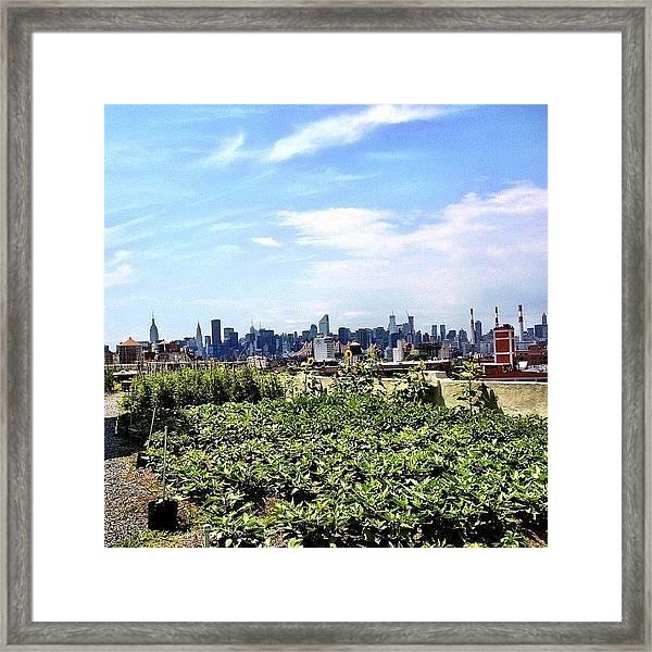 Urban Nature - New York City Framed Print
