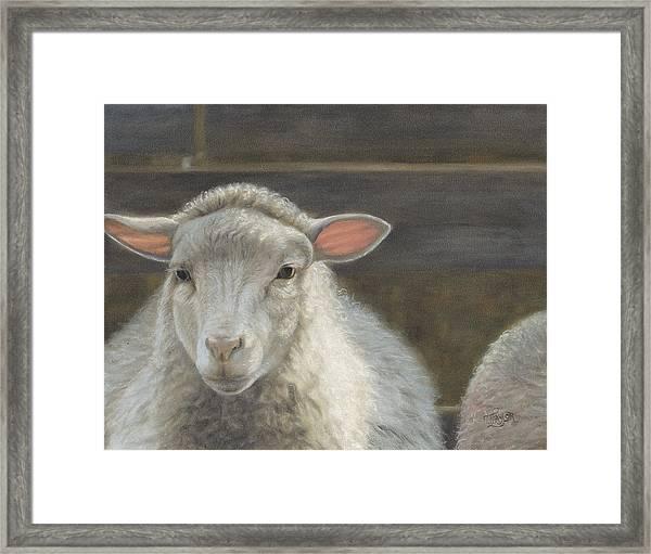 Waiting For The Shepherd Framed Print