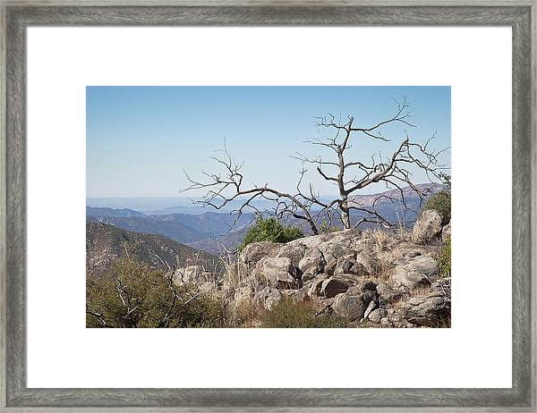 Was A Tree Framed Print