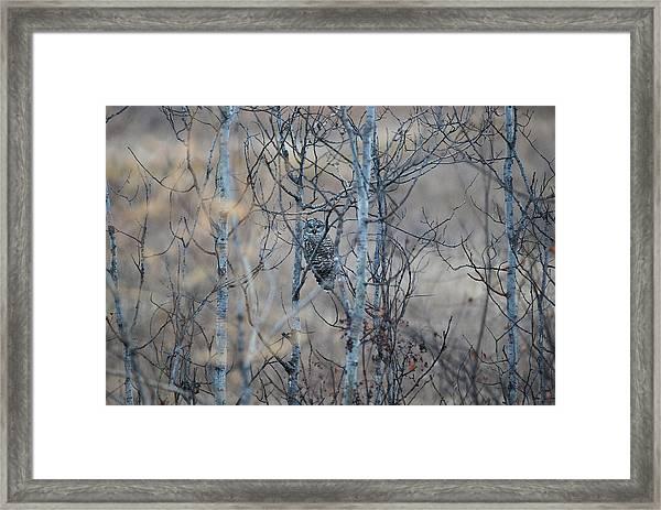 Watchful Owl Framed Print