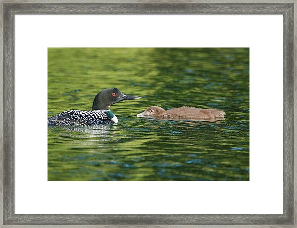 Watchful Parent Framed Print