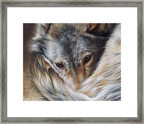 Watchful Rest -close-up Detail Framed Print