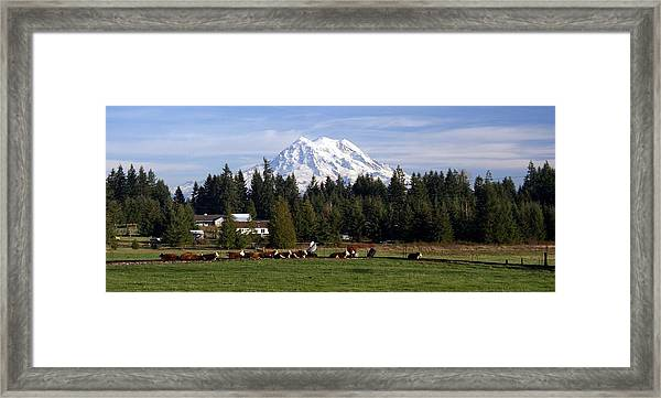 Watching Over The Herd Framed Print