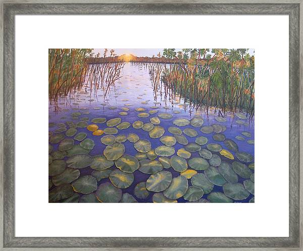 Waterlillies South Africa Framed Print