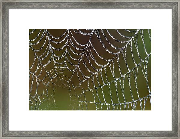 Web With Dew Framed Print