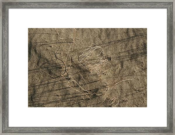 Weeds In Sand Framed Print