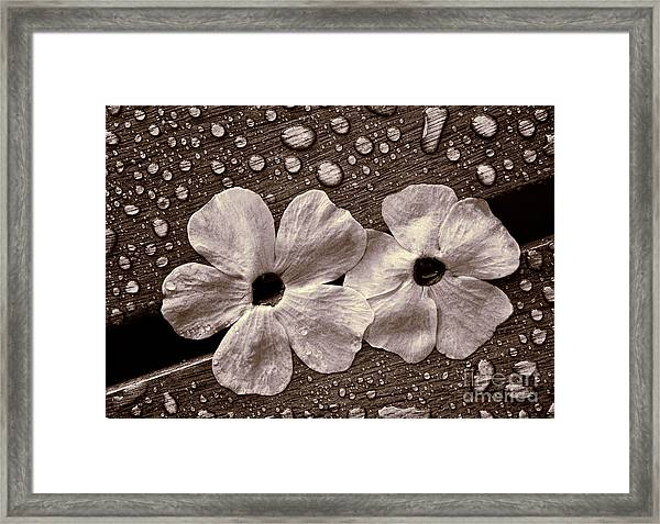 Wet Flowers And Wet Table Framed Print