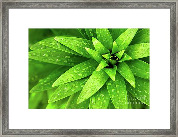 Wet Foliage Framed Print